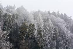 Frost so weiss wie der Sommer