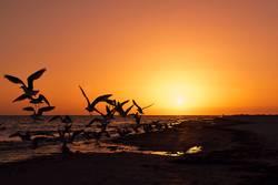 Vögel bei Sonnenuntergang am Strand