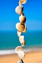 Muscheln an einer Schnur vor Himmel, Meer und Sandstrand