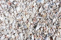 Muschelschalen auf dem Strand