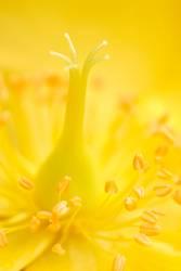 Nahaufnahme einer gelben Blume