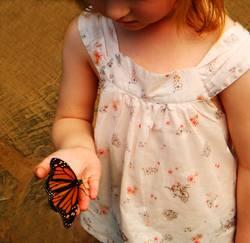 Flieg kleiner Schmetterling!