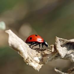 Ein kleiner Käfer geht spaziern