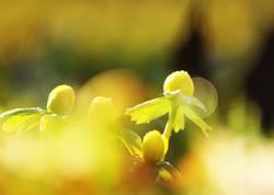 Ich träum vom Frühling...