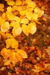 Herbsterinnerungen