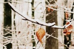 Blatt im Schneewald