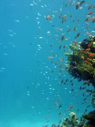 Unterwasserspiel