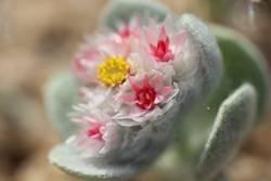Kleine Blume in der Wüste