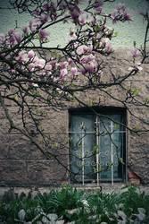magnolien und stahl