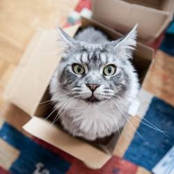 Katz' in Box