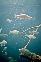 freitags Fisch