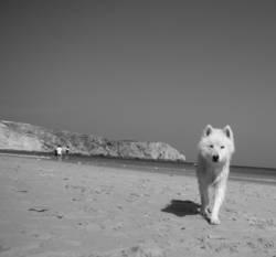 {greyhound}