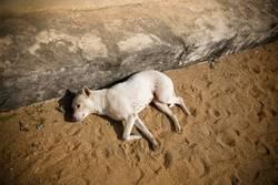 {lazy dog}