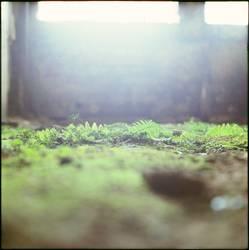 [FFM2011.1] Soft green
