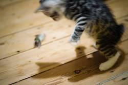 Katz und Maus