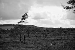Schwarzes Moor (II)