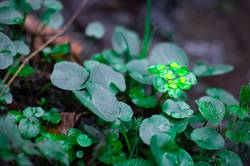 Leuchten im Wald