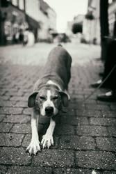 Hundsmüde
