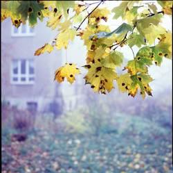 ab in den Herbst