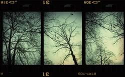 3in1 Baum