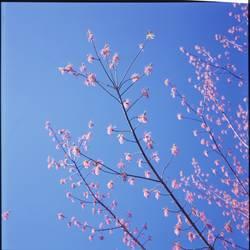 Frühlingshauch II