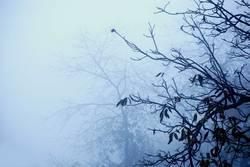 nebelbäume.