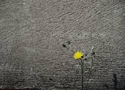 Flower vor einer Mauer
