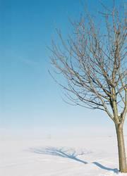 Baum in Winterwonderland