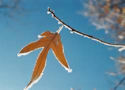 Ein frostiges Blatt