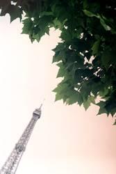 Unterm Baum in Paris