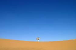Das Kamel.