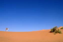 Wüstenschiff
