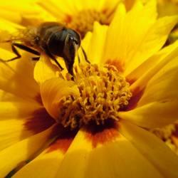Pollenrüssel
