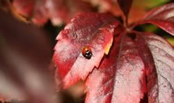 Mary the Ladybird
