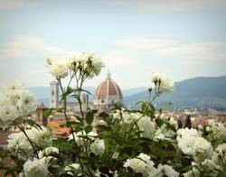 firenze florence rosa rose