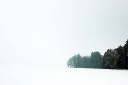 Weiß und Wald
