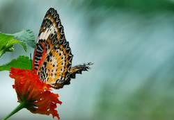 Schmetterlingsfoto