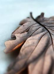 Herbst von der grauen Seite