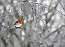 Vögelchen mit Schal