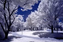 weißer Sommer 2