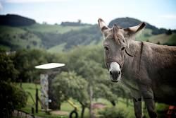 Der Esel auf dem Berg