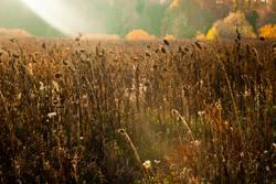 Zwischen Sommer und Herbst II