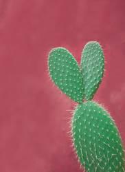 Kaktus mit Ohren