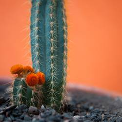 Kind-Mama-Kaktus