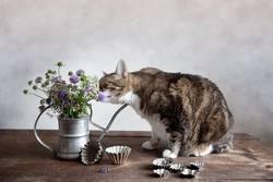 Stilleben mit der Katze