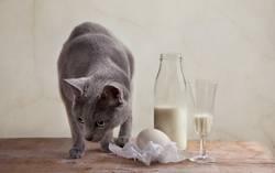Katze und Milch