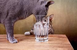 Durstige Katzen
