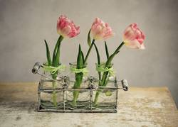 Stilleben mit Tulpen