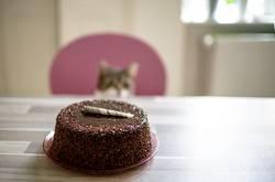 Kuchen & Katze
