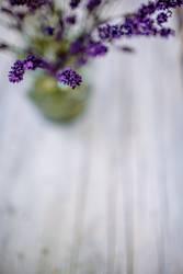 Lavender Stillleben